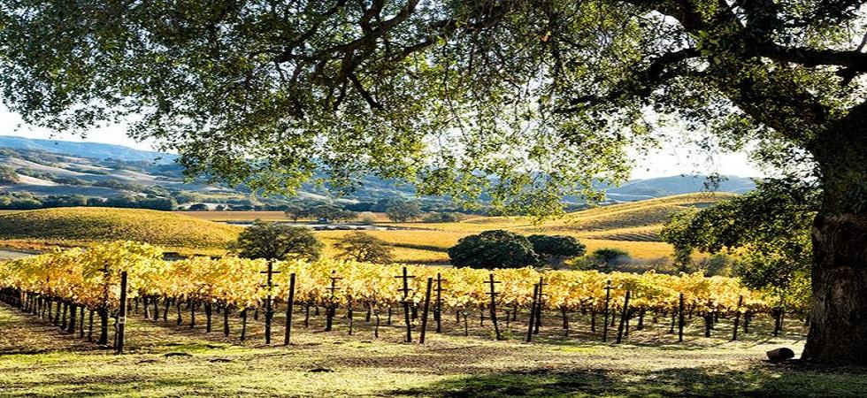 hogan-fall-vineyard-980x450.jpg